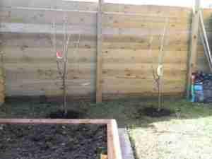 Image of Fruit trees