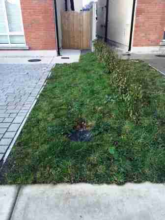 Image of untidy lawn area and new hedging
