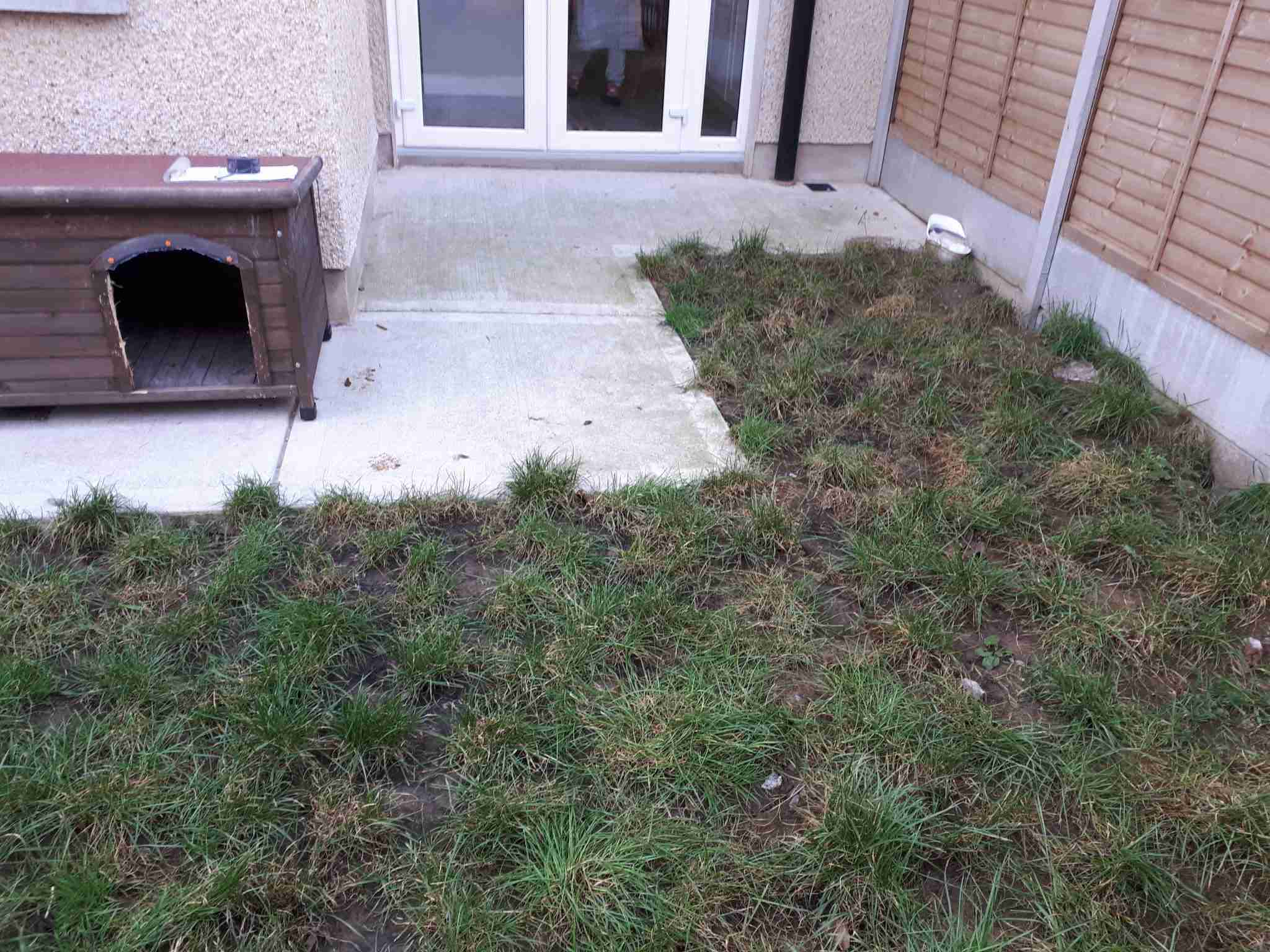 Image of lawn in poor condition, patchy due to animals and wet weather