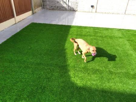 Pet-friendly-Artificial-lawn